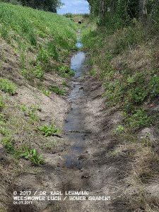 Wieder Wasser im Weesower Luch