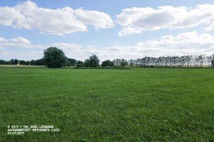 Grünlandfläche im Weesower Luch