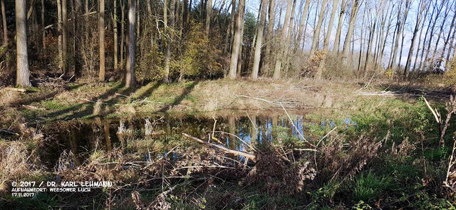 Kleingewässer hinterer Bereich