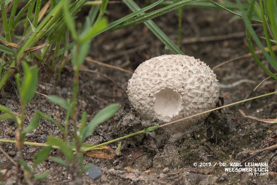 Pilze im Luch