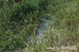 Parallelgraben zum Igelpfuhl (Graben 1)