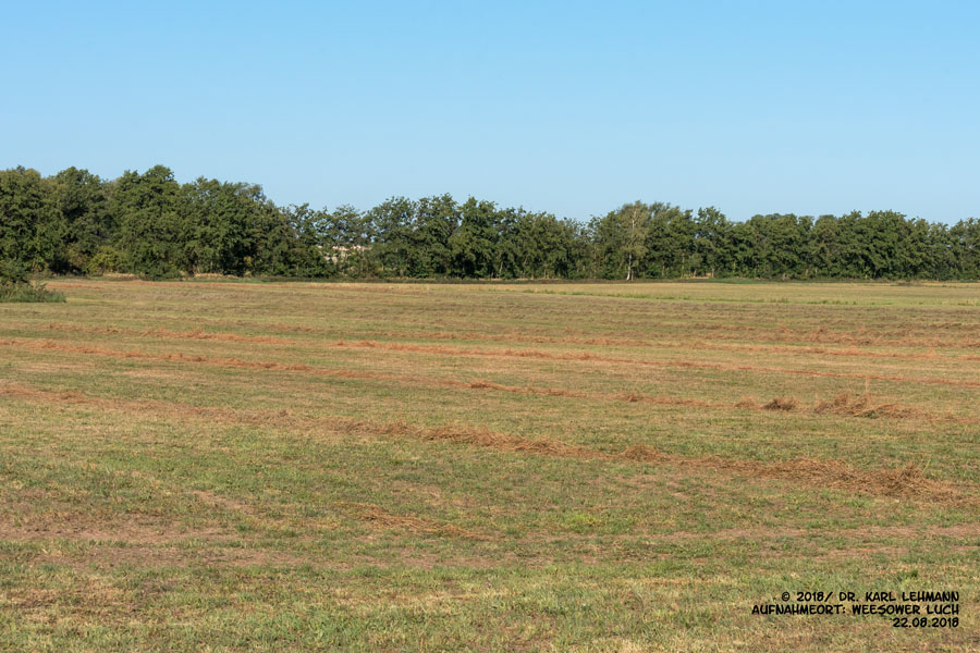 2. Mahd der Grünlandflächen