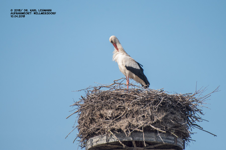Willmersdorfer Storch