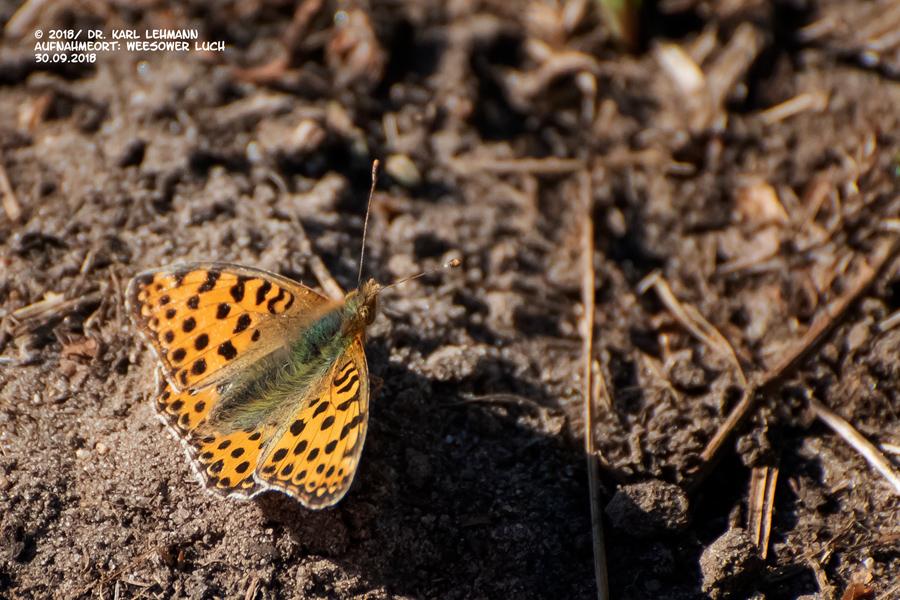 Schmetterlinge im Herbst