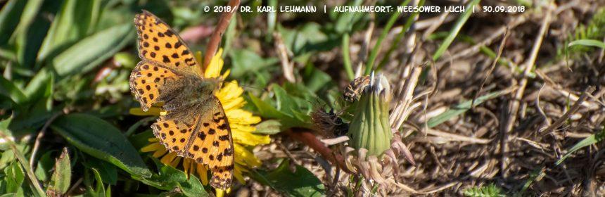 Schmetterlinge im Herbst,_Header