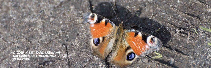 Header Schmetterlinge