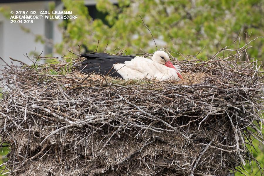 Willmersdorfer Storch