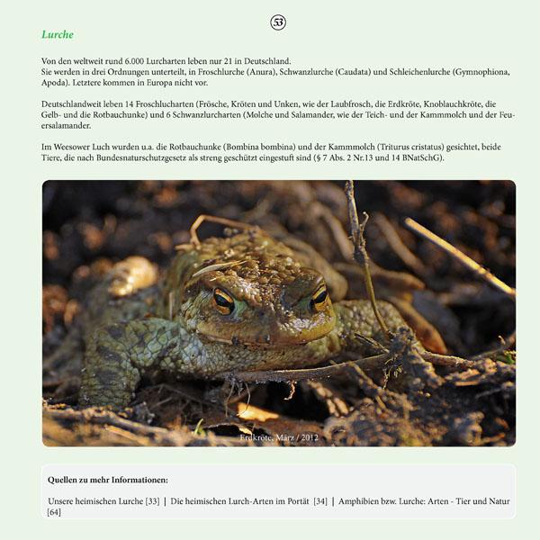 Seite 53 Bildband NSG Weesower Luch