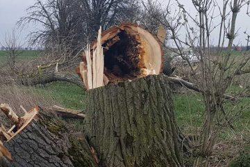 Beitragsbild Baumfällung Weesower Luch